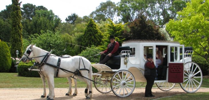 horse and carriage; fairytale wedding; marriage celebrant, bathurst wedding; marriage celebrant; here comes the bride